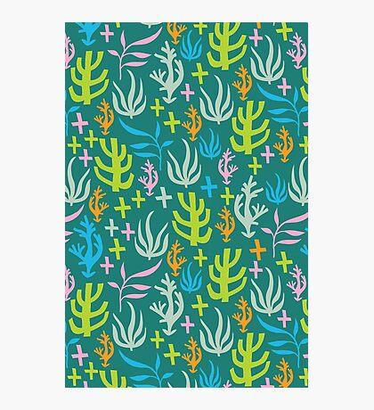 Seaweed Pattern Photographic Print