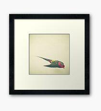 Bird Study #4 Framed Print