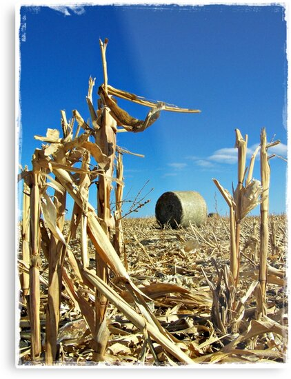 Remains of the Harvest by Greg Belfrage
