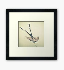 Bird Study #1 Framed Print