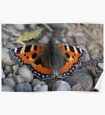 Fiery blue butterfly  Poster