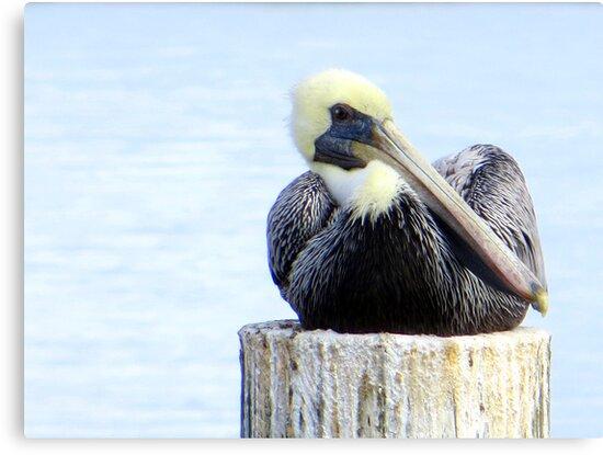 Pelican at Cedar Key, Florida by AuntDot