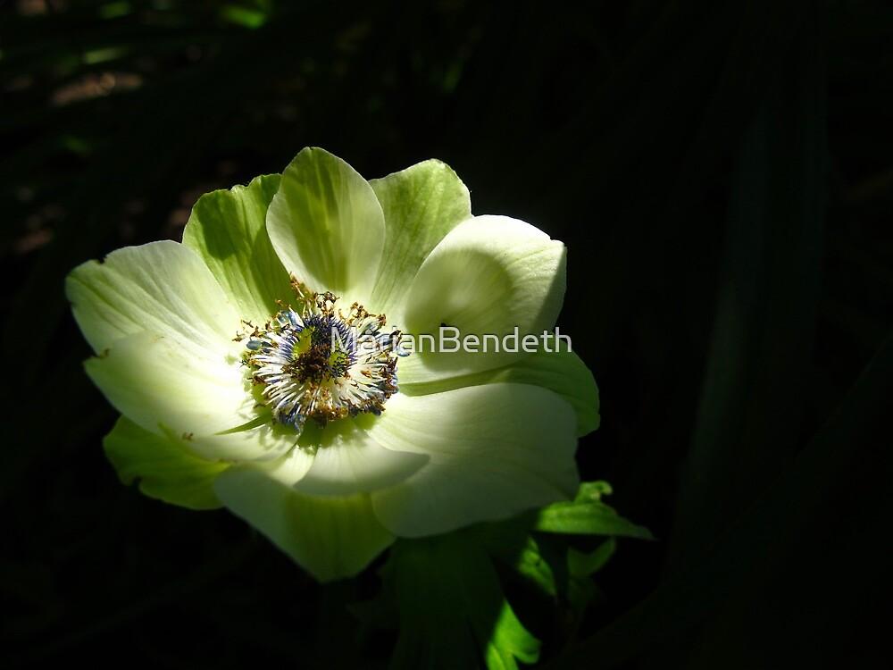Green Anemone by MarianBendeth