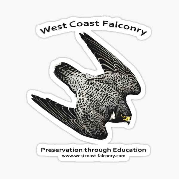 Cubbie the Peregrine Falcon Sticker