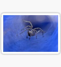 macro photography of a Spider  Sticker