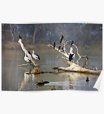 Riverine roost Poster