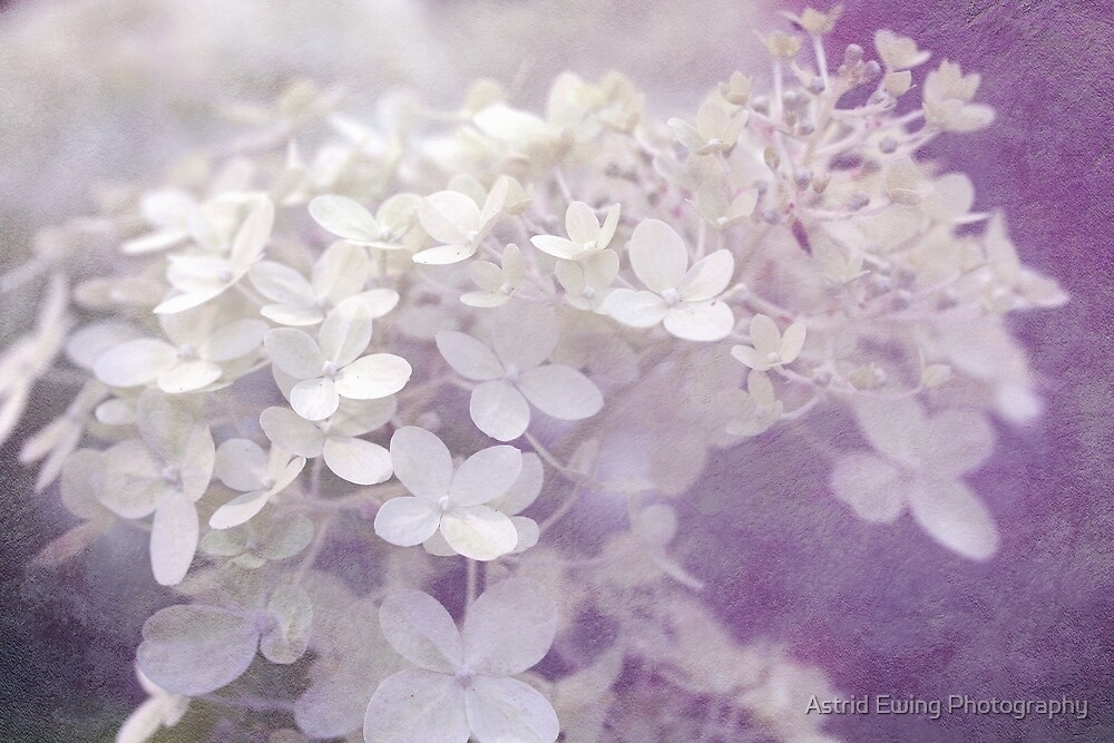 Veiled Beauty in Purple by Astrid Ewing Photography