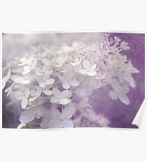 Veiled Beauty in Purple Poster