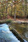 Autumn Overflow by Carolyn  Fletcher
