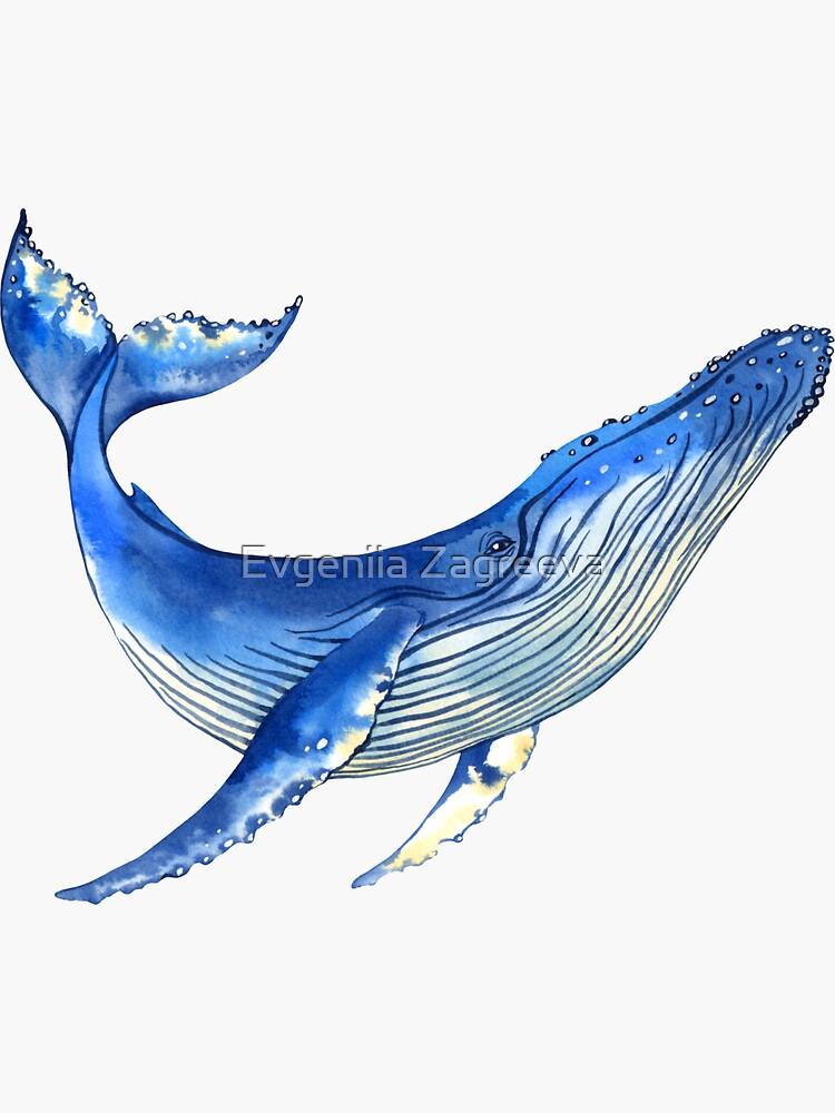 Watercolor whale by achtung-ein
