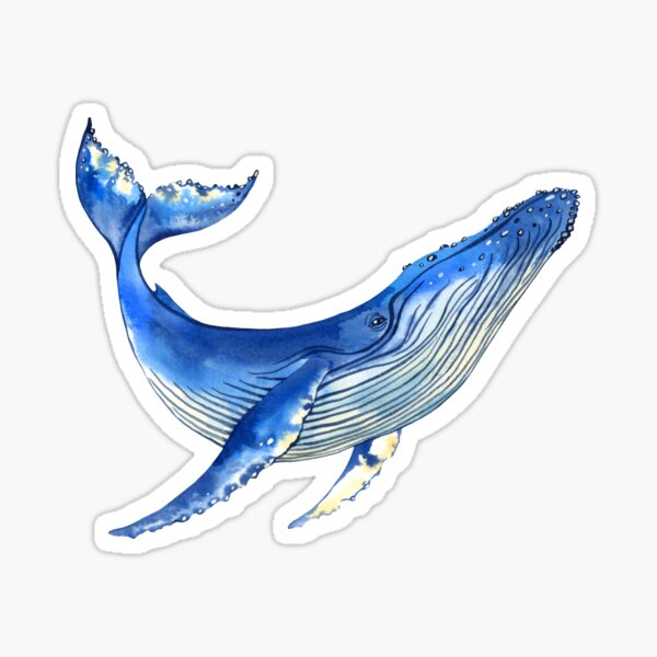 Watercolor whale Sticker