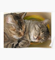 Sandy and Buster Brown Sleeping Poster