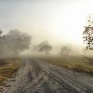 Misty Sunrise by Jamie Lee
