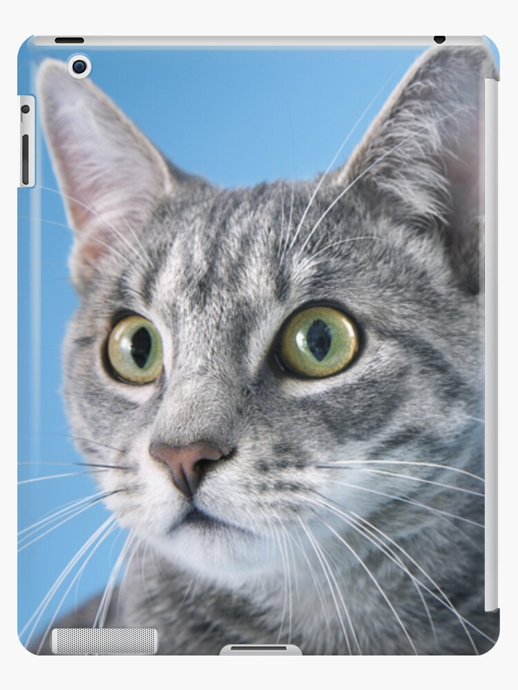 CAT WITH BLUE BACKGROUND by monkeydesigns4u