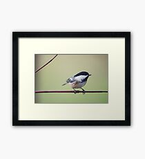 Chick-a-dee on red twigged dogwood Framed Print