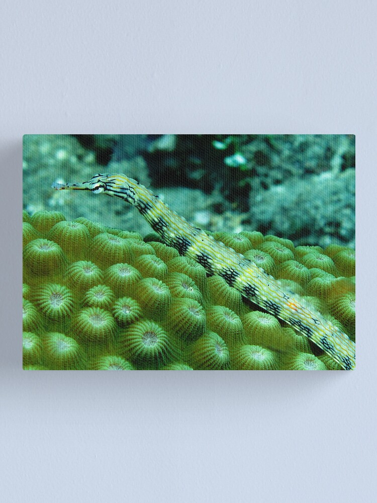 Alternate view of Pipefish on Favid Canvas Print