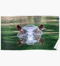 Hippo reflections Poster