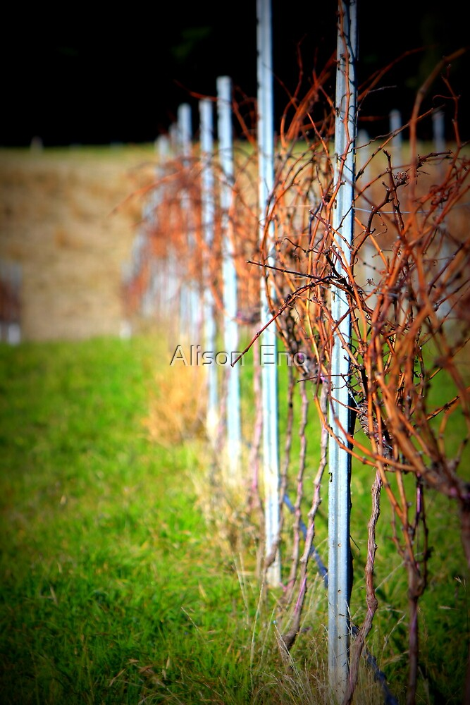 Hanging Rock Winery, Victoria, Australia - 2012 by Alison  Eno