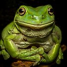 Portrait Of A Green Tree Frog by Kerrod Sulter