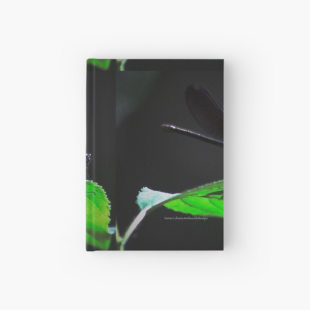 Dragonfly of the enchanted forest By Yannis Lobaina  Hardcover Journal