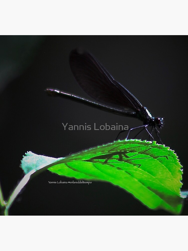Dragonfly of the enchanted forest By Yannis Lobaina  by lobaina1979