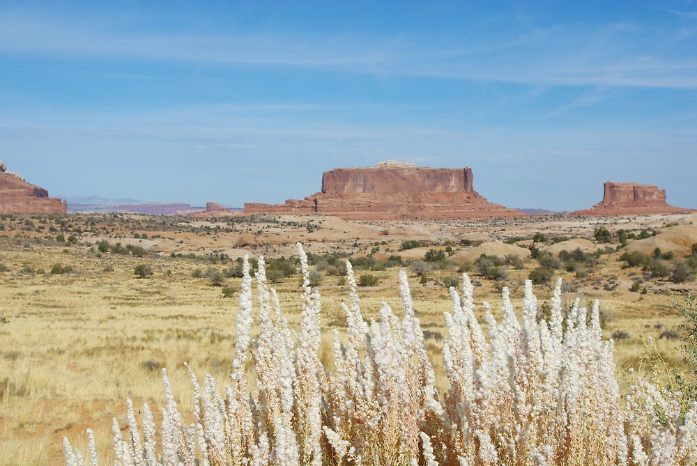 Plants and rocks, Utah by Claudio Del Luongo