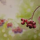 Berries by Sandrine Pelissier