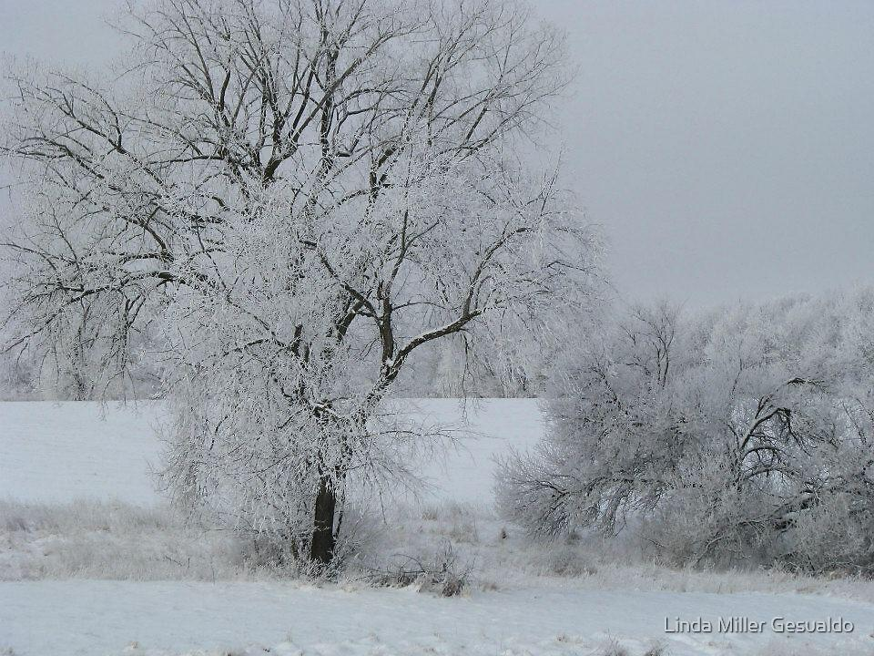 Snow Trees by Linda Miller Gesualdo