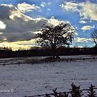 Winter Landscape, Cultra. by Laura Butler