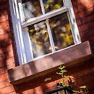 Anybody's Window by EdwardKay