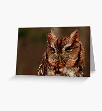 Eastern Screech Owl Greeting Card