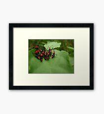 Small Hoppers Framed Print