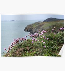 Sea Thrift Poster