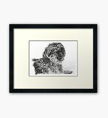 Schnell, Wire Haired Dachschund Framed Print