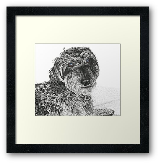 Schnell, Wire Haired Dachschund (cropped edge) by Paul Stratton