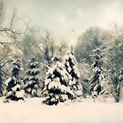 Gentle January by Jessica Jenney