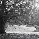 Winter Light by John Burtoft
