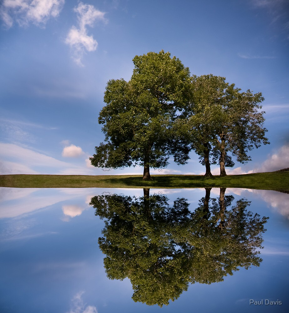 Three Trees reflection by Paul Davis