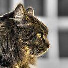 Furry Friend by dgscotland