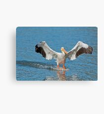 Pelican Coming in for the Landing Canvas Print