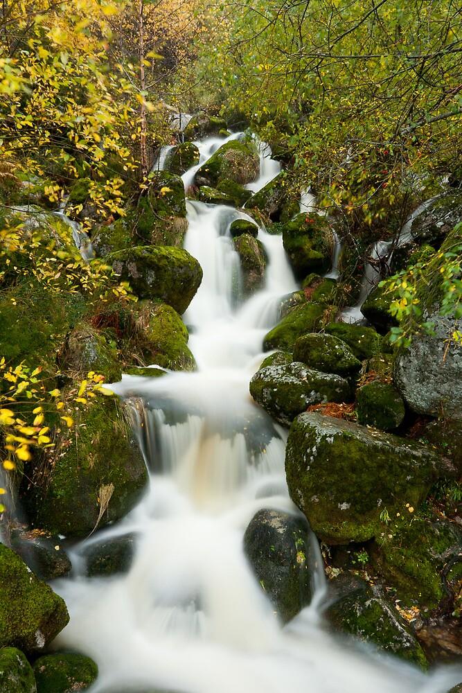 Mountain stream 2 by Fernando Romão