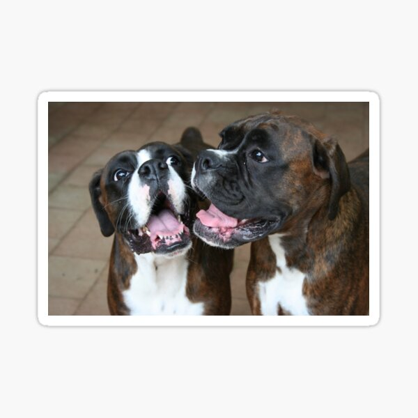 Luthien & Arwen -Boxer Dogs Series- Sticker
