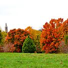 Fall Color At Maymont by Fred Moskey