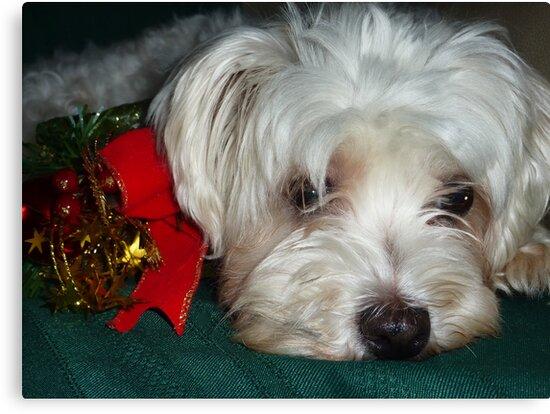 Merry Christmas everyone by Chris Brunton