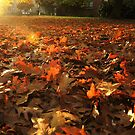 Autumn leaves by Themis
