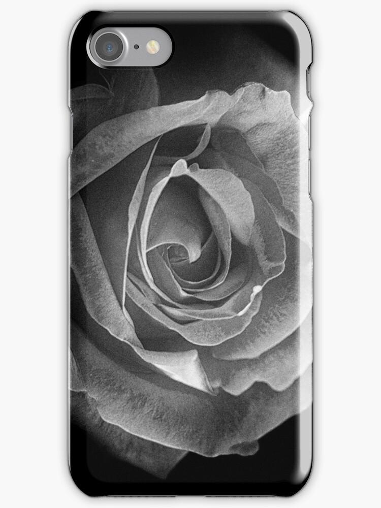 Rose BW by ollodixital