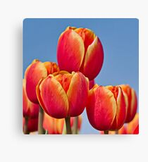 Tulips in the sky Canvas Print