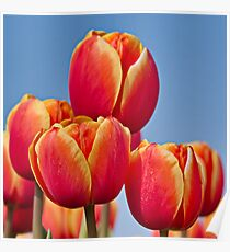 Tulips in the sky Poster