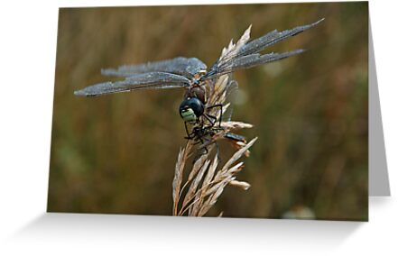 Dragonfly by Skabou
