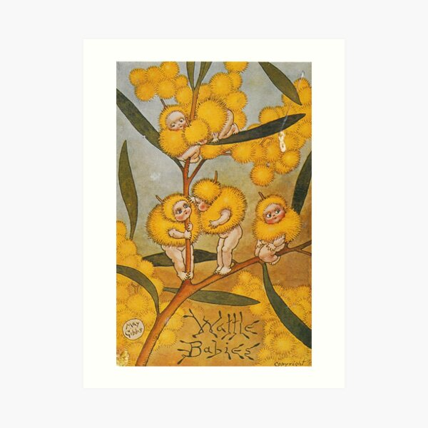 Wattle Babies - May Gibbs Print  Art Print